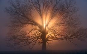 Картинка солнце, ветки, дерево, утро, дымка