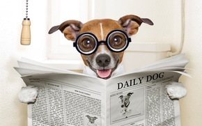 Картинка морда, юмор, очки, газета, туалет, сидит, читает, довольный, Джек-рассел-терьер