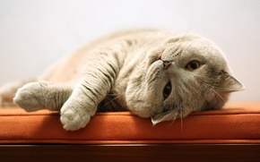 Картинка кошка, лежанка, кот