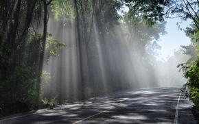Картинка sky, trees, rays, sun, Road