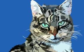 Картинка кот, усы, фон, вектор, мордочка, мурзик