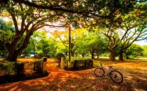 Картинка деревья, велосипед, парк