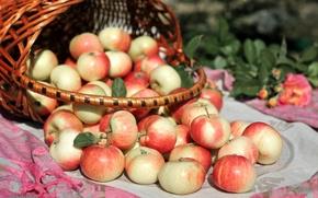 Картинка широкоформатные, широкоэкранные, widescreen, apple, корзинка, HD wallpapers, обои, яблоко, еда, полноэкранные, корзина, background, яблоки, wallpaper, ...
