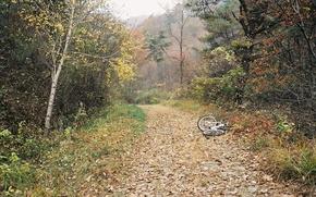 Картинка осень, лес, деревья, велосипед, туман, дорожка
