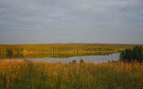 Картинка лес, небо, трава, облака, деревья, пейзаж, река, фон, дерево, widescreen, обои, облако, wallpaper, широкоформатные, background, ...