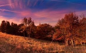 Картинка поле, осень, небо, деревья, Природа, sky, trees, nature, autumn, fall