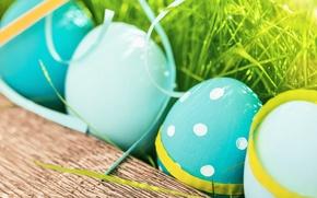 Картинка трава, цветы, яйца, весна, Пасха, flowers, spring, Easter, eggs, decoration, Happy
