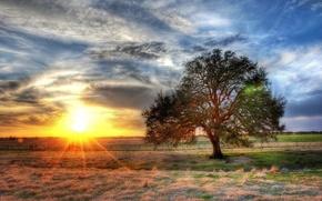 Обои дерево, HDR, Солнце, поле