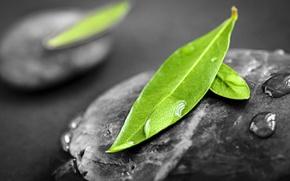 Картинка листья, капли, камень, феншуй