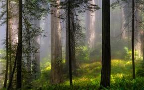 Картинка лес, лето, деревья, пейзаж, природа, туман