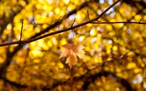 Картинка осень, листья, макро, ветки, желтый, фон, дерево, widescreen, обои, размытие, листик, wallpaper, листочек, широкоформатные, background, ...