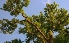 Картинка ветки, Дерево, колесо