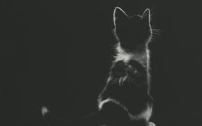Картинка котенок, сидит, by shonechacko