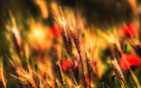 Картинка поле, осень, трава, растение, луг