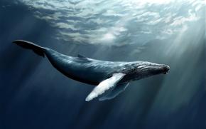 Картинка море, вода, рыба, арт, кит, кашалот