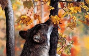 Обои волк, осень, лес