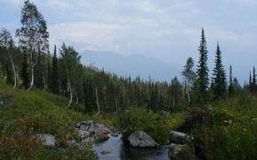 Картинка лес, горы, ручей, контур, березы, Сибирь