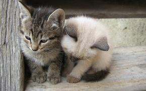 Картинка белый, серый, дружба, котята