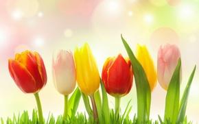 Картинка трава, блики, тюльпаны