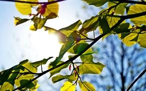 Картинка небо, солнце, макро, зеленый, дерево, голубой, Лист, луч