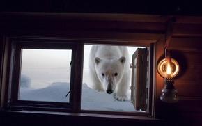 Обои медведь, окно, ситуация