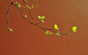Картинка стена, ветка, весна