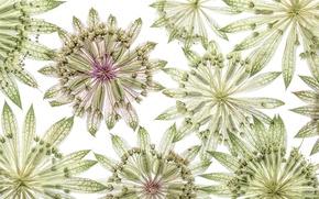 Картинка цветы, узор, лепестки