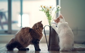 Картинка цветы, котята, Daisy, Hannah, © Benjamin Torode