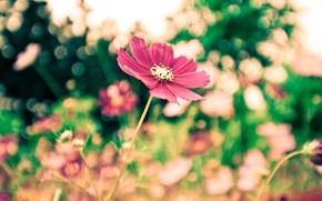 Картинка цветы, фокус, красота, парк, широкоформатные обои, широкоэкранные обои, размытие, листья, свежесть, зелень, настроение, цветение, тишина, ...