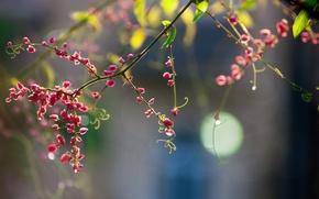 Картинка цветы, веточка, розовые, усики, боке