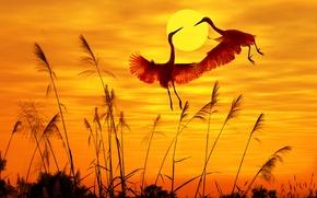 Картинка птицы, birds, солнечный свет, sunlight, закат небо, sunset sky, flying birds, летающих птиц