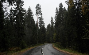 Картинка лес, лето, деревья, Природа, машина. небо.