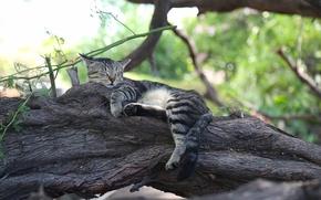 Картинка кошка, кот, дерево, отдых, сон, спящая