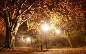 Картинка park, romantic, night