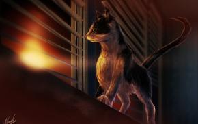Обои кошка, окно, арт, интерес, закат, жалюзи, подоконник, кот