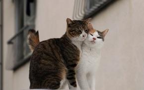 Обои пара, улица, любовь, коты