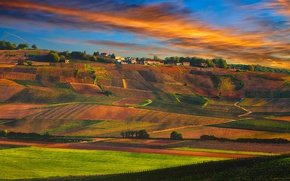 Картинка France, village, sunset, vineyards, Champagne