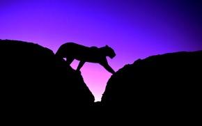 Обои кошка, небо, закат, пантера, силуэт, леопард