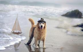 Картинка море, собака, кораблик