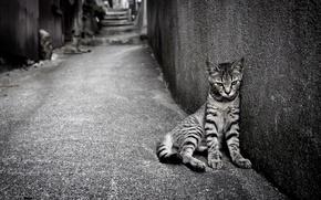 Картинка кошка, одиночество, улица