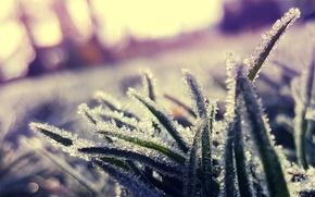Обои иней, трава, кристаллы, холод