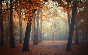 Картинка осень, лес, листья, деревья, туман, forest, trees, autumn, leaves, fog