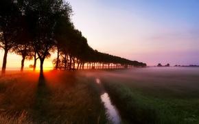 Обои трава, лучи, деревья, туман, ручей, рассвет