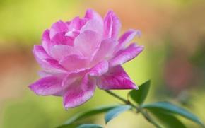 Обои лепестки, краски, цветок
