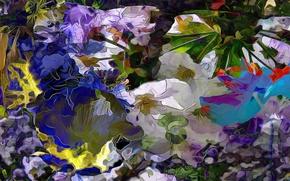 Картинка цветы, природа, растение, лепестки, луг
