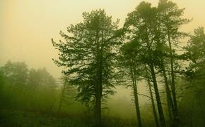 Картинка лес, деревья, природа, туман, forest, Nature, trees, fog