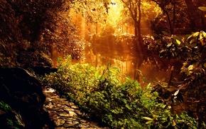 Картинка река, растения, Свет