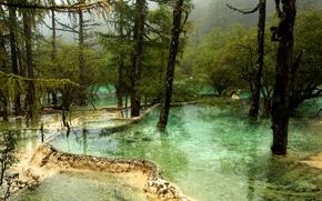 Обои вода, деревья, туман, парк, Китай, речка, Jiuzhaigou National Park