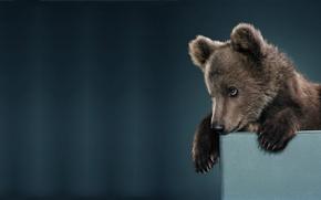 Обои настроение, минимализм, малыш, мишка, медвежонок