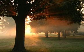 Обои рассвет, закат, природа, лес, солнце